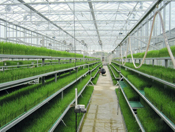 The Application of Ozone in the Agriculture
